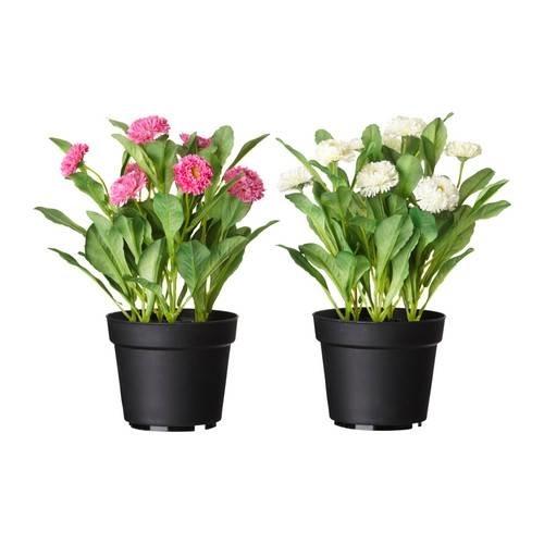 Piante Da Appartamento In Vaso.Come Ottenere Anche In Appartamento Piante Da Vaso Rigogliose