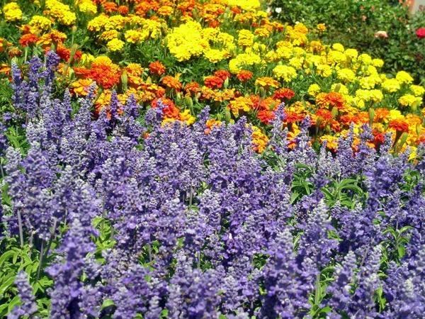 Fiori e piante piante appartamento for Piante e fiori