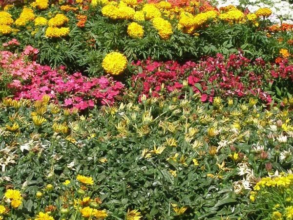 Fiori e piante piante appartamento for Piante e fiori da appartamento