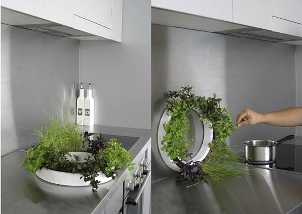 Piante appartamento per il bagno