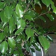 piante per ridurre l'inquinamento