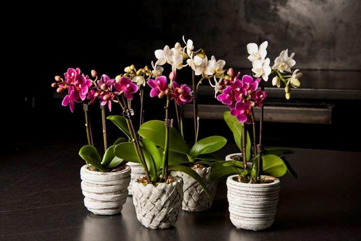 Piante da appartamento piante appartamento - Piante fiorite da appartamento ...
