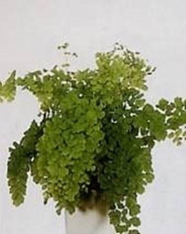 Piante in bagno piante appartamento for Piante e fiori da appartamento