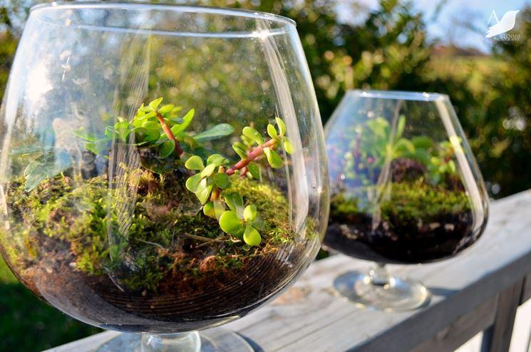 piante in contenitori di vetro