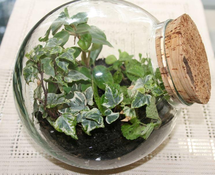 esempio di piante in bottiglia