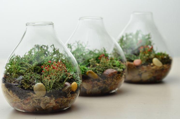 piante in contenitore di vetro