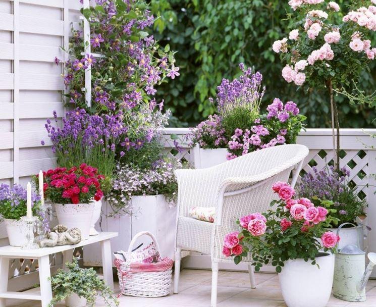 Piante profumate in balcone - Piante Appartamento - Quali piante profumate pe...
