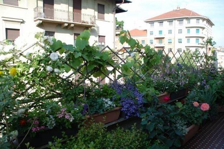Rampicanti da balcone piante appartamento - Piante sempreverdi per terrazzi ...