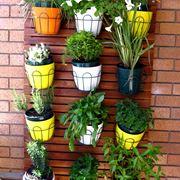 piante rampicanti da balcone