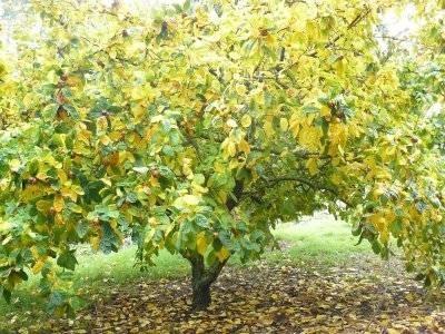 Alberi da frutto piante da giardino - Alberi frutto giardino ...