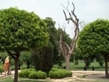 Alberi da giardino - Piante da Giardino - Alberi per il giardino