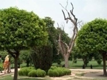Alberi da giardino piante da giardino alberi per il giardino - Alberi ornamentali per giardino ...