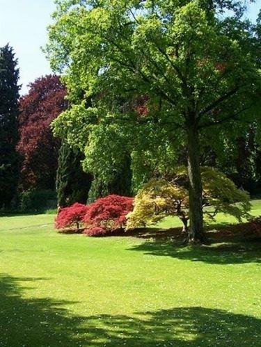 Alberi da giardino piante da giardino alberi per il giardino - Alberi sempreverdi da giardino ...