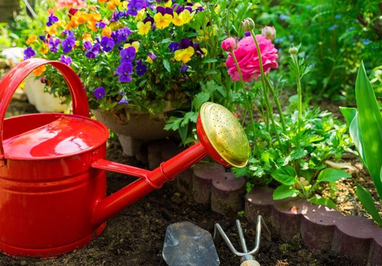 Annaffiature invernali piante da giardino come - Piante da giardino invernali ...