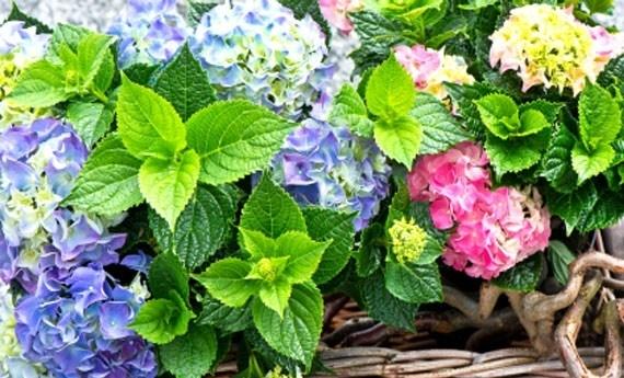 Fiori da giardino piante da giardino le for Alberi da giardino con fiori