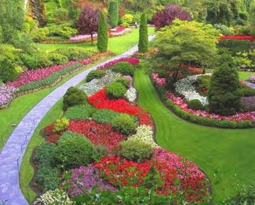 Fiori da giardino piante da giardino le for Fiori sempreverdi da giardino