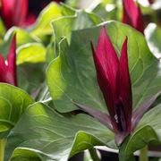 piante ombra