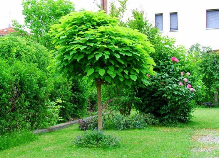 Piante anti zanzara piante da giardino - Alberi sempreverdi da giardino ...