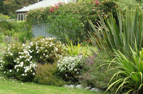 Piante arbustive piante da giardino - Piante tropicali da giardino ...