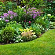 piante arbustive
