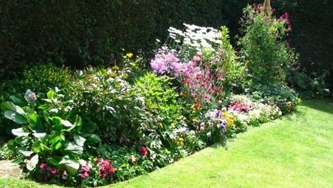 Piante da giardino piante da giardino le principali for Nomi piante da giardino