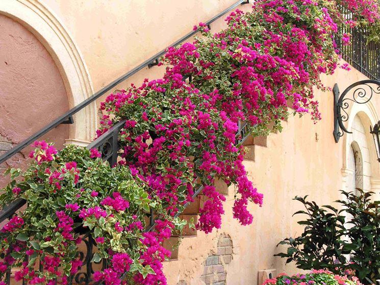 piante rampicanti piante da giardino