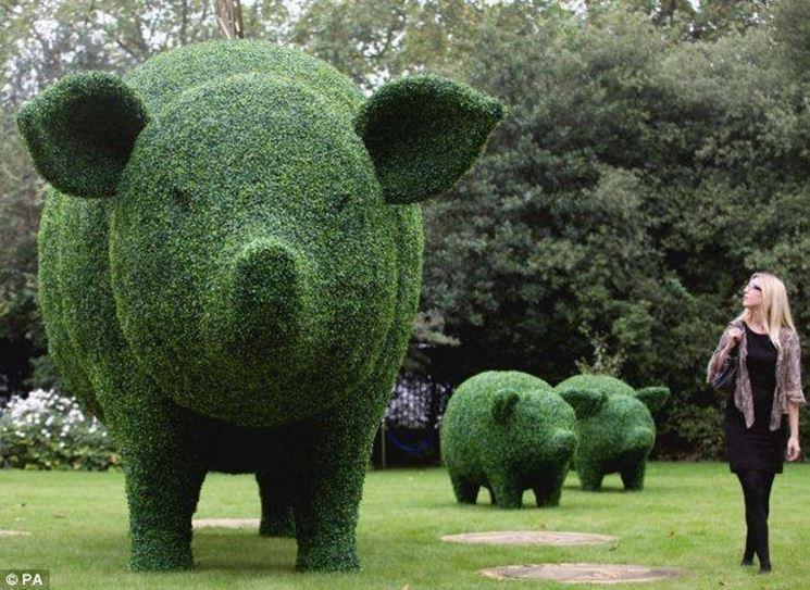 Siepi da giardino piante da giardino - Alberi particolari da giardino ...