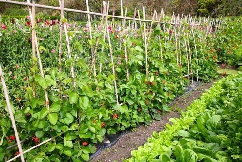tutori per piante piante da giardino On tutori per piante