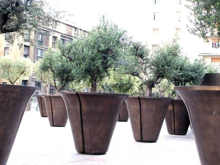 curare ulivi in vaso