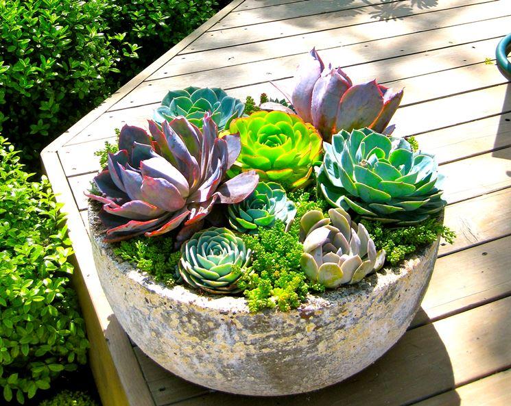 Composizioni piante grasse piante grasse for Aiuola piante grasse