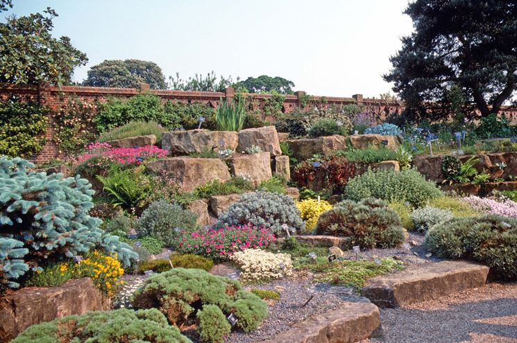 giardino con piante grasse