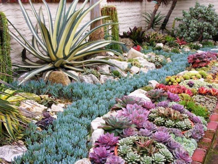 Giardini piante grasse piante grasse piante grasse da - Nomi di piante da giardino ...