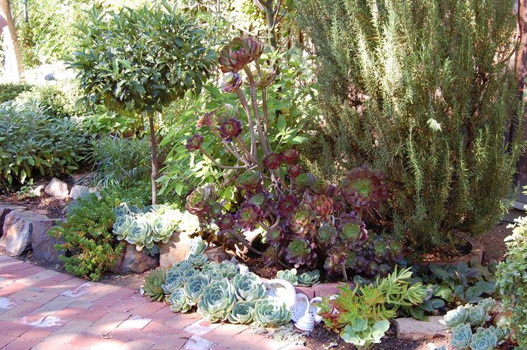 piante grasse in giardino