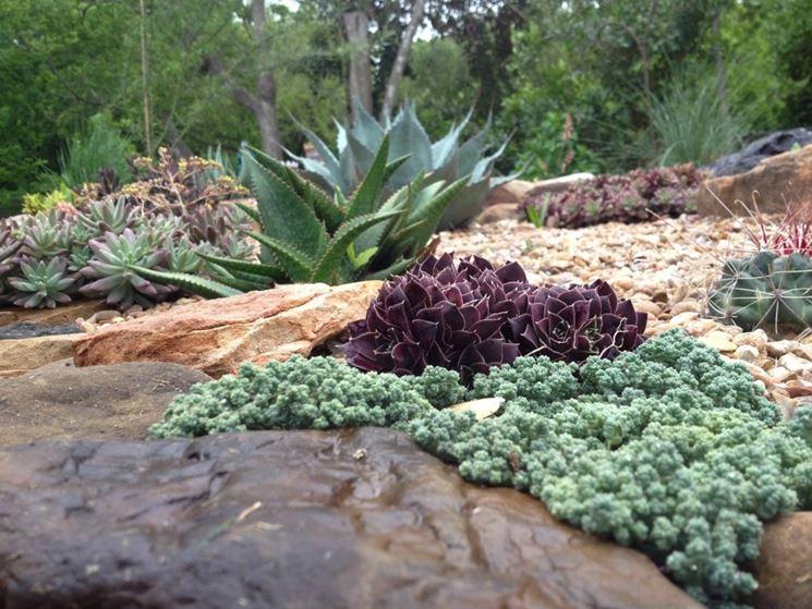Giardini piante grasse piante grasse piante grasse da - Piante x giardino ...