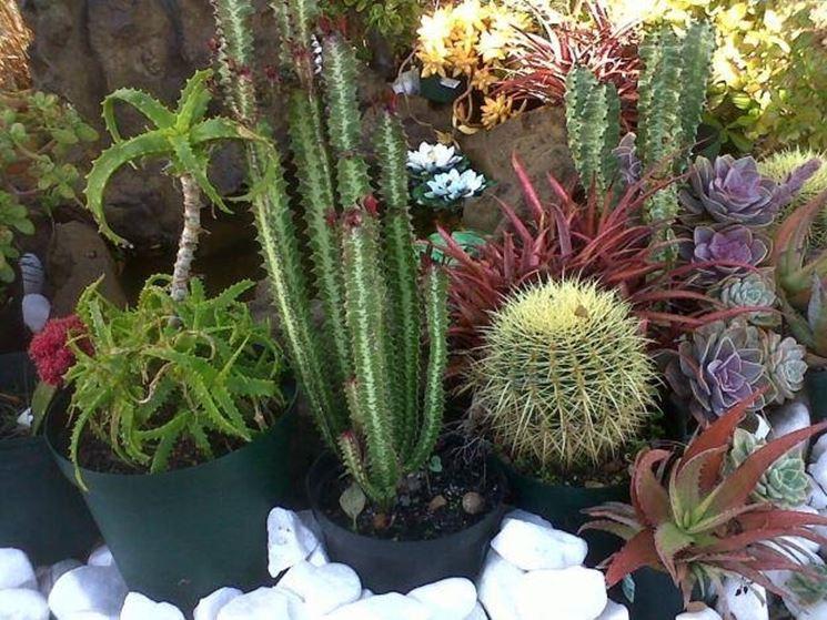 piante grasse cactus piante grasse