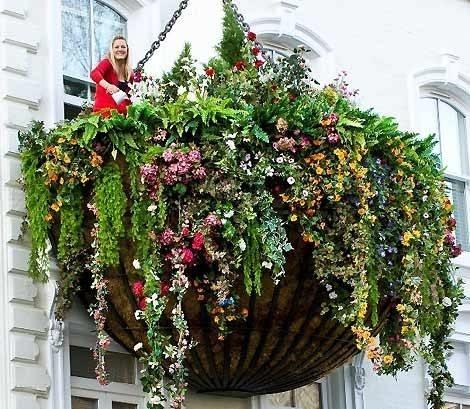 Piante grasse da balcone piante grasse for Fiori primaverili da balcone