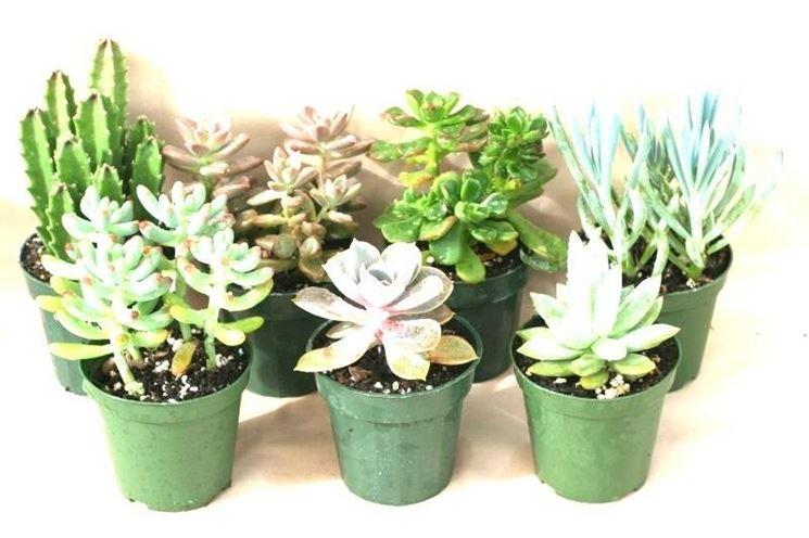 Piante grasse da esterno piante grasse - Piante grasse da esterno pendenti ...
