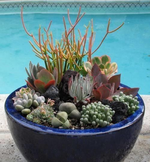 Piante grasse da esterno piante grasse - Vasi con piante grasse ...