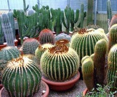 Piante grasse finte piante grasse for Piante grasse ornamentali