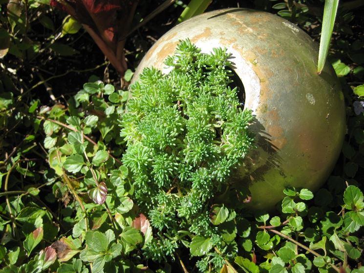 coltivazione piante grasse pendenti