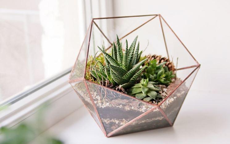 Una composizione di succulente