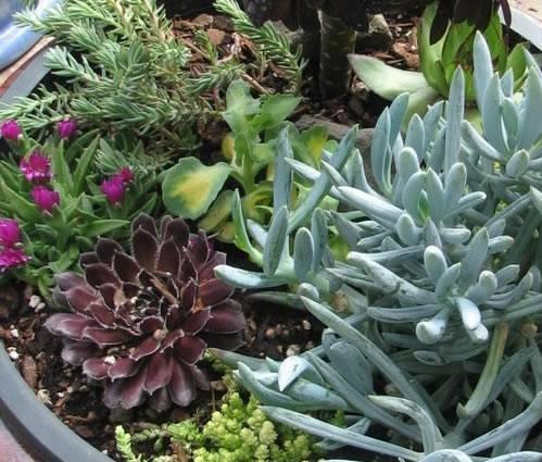 Vendita piante grasse piante grasse for Piante rare