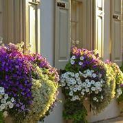 fiori per fioriere