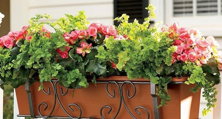 Fioriere vasi for Piante e fiori