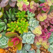 composizione piante grasse in vaso di vetro