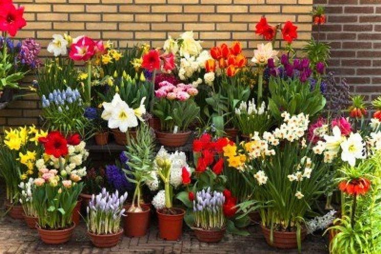 Amato Vasi per fiori - Vasi SH76