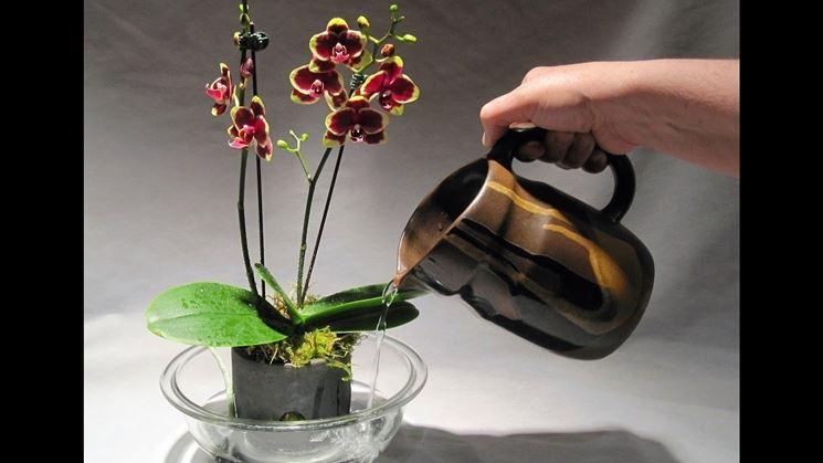 Vaso per orchidee
