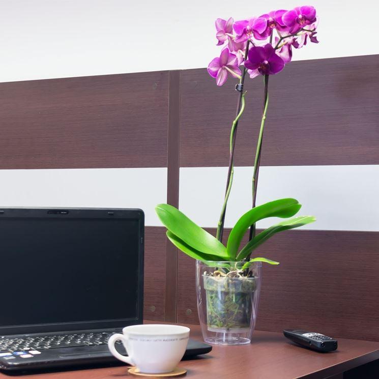 Vaso plastica trasparente per orchidea