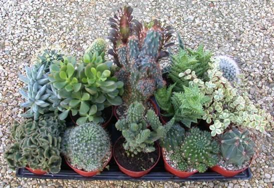 Vasi per piante grasse vasi - Vasi con piante grasse ...