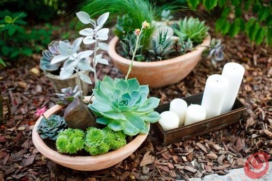 vasi per piante grasse - Vasi